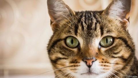 Come i gatti hanno conquistato il mondo antico – Infinity News (Blog)