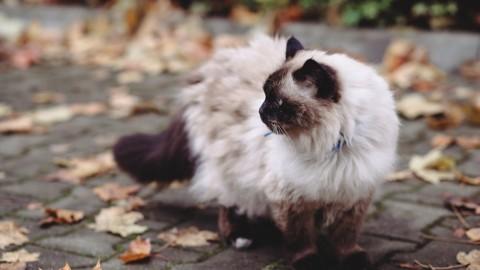 Lavare il gatto quando: ecco i casi in cui è possibile – RomaH24