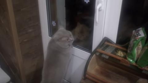"""Il gatto Giacobbe parla: """"Aprimi la porta"""" [VIDEO] – Velvet Pets"""