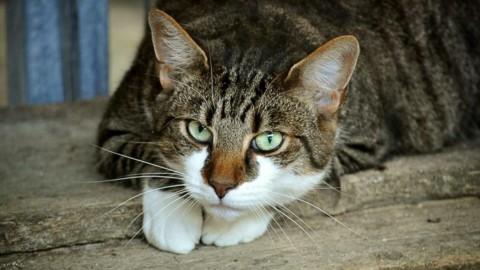 Sterilizzazione Gatto: Ecco Quanto Costa la Castrazione Gatto – Amalfi Notizie