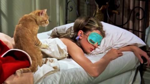 È confermato: i gatti non sono né egoisti né asociali – Vanity Fair.it