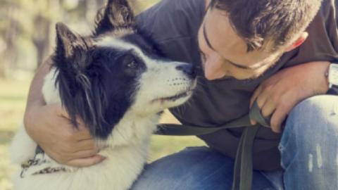 Cani adottati: quando un cane realizza di aver trovato un padrone – www.amoreaquattrozampe.it (Blog)