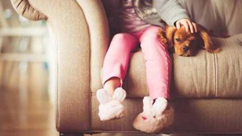 Cani e gatti sono un lusso. Amici pet tassati come automobili e … – Affaritaliani.it
