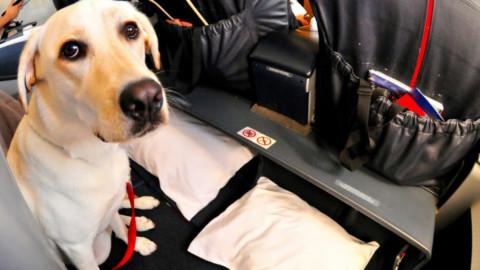 Animali: le regole per portarli sull'aereo – SiViaggia