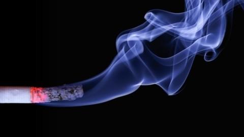 Sigaretta, nemica (anche) del gatto – tio.ch