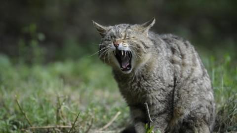 L'importanza dell'igiene orale per il gatto – tio.ch