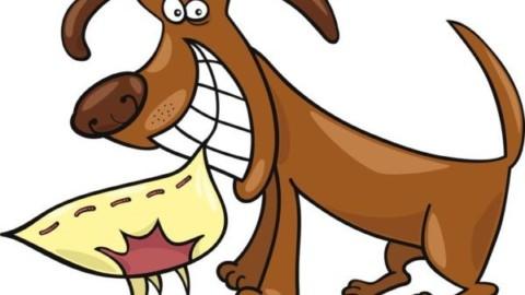 Animali in condominio: si possono vietare? – La Legge per Tutti