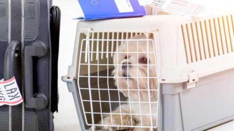 Volare con il cane: come sono le regole per viaggiare sereni – Vanity Fair.it