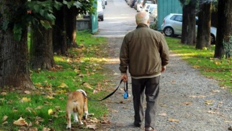 Cani e gatti – IlPiacenza