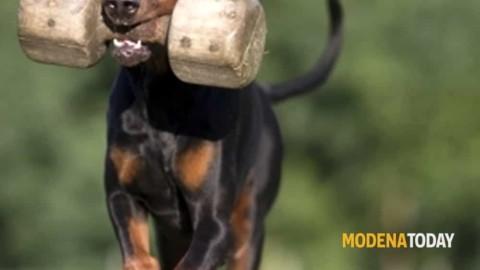 """A Campogalliano una gara per """"arruolare"""" i cani delle forze dell'ordine – ModenaToday"""