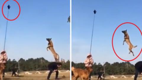 Quanto può saltare in altezza un cane? – www.amoreaquattrozampe.it (Blog)