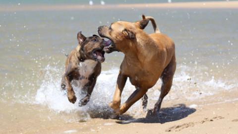 Il patentino per proprietari di cani e per chi intende diventarlo – StatoQuotidiano.it