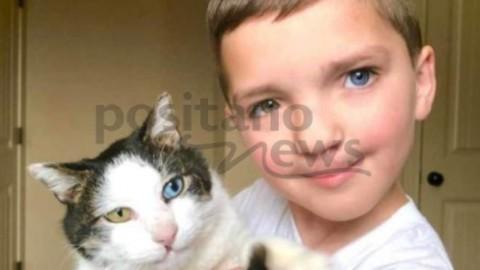 Il bimbo bullizzato per il suo aspetto che trova conforto nel gatto che … – Positanonews