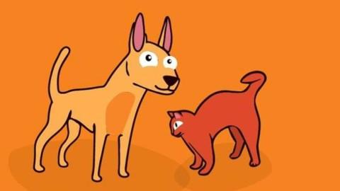"""Lav in piazza contro le tasse su cani e gatti domestici: """"Non sono un … – Positanonews"""
