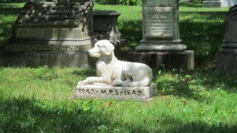 Cimitero per animali: un bosco in memoria dei nostri 4zampe – www.amoreaquattrozampe.it (Blog)