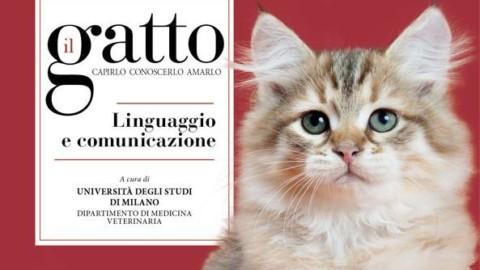 Mondo gatto, quando l'intelligenza ha baffi e coda – Corriere della Sera