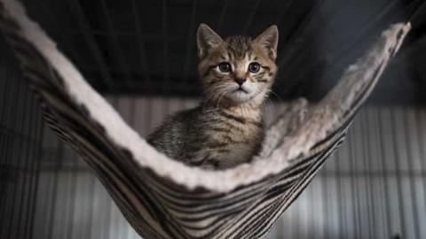 Regno Unito, avvistato in una foresta gatto di oltre un metro – Sky Tg24