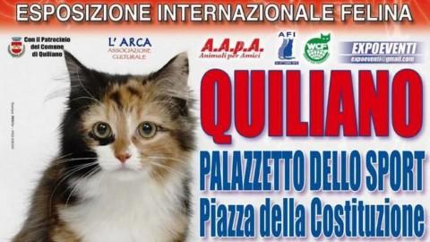 A Quiliano esposizione internazionale felina: in mostra i gatti più … – Il Vostro Giornale