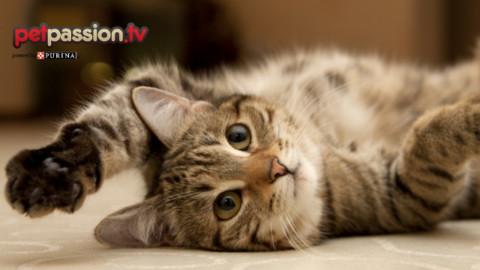 Sai come scattare la foto perfetta ad un gatto? – Petpassion.tv