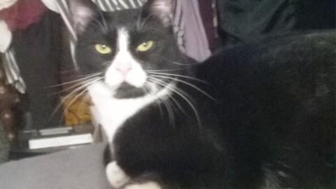 Aiuti per i gatti malati a Savona – SavonaNews.it