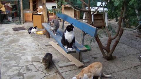 A Savona un apericena per i gatti del rifugio di Albissola e del canile … – Il Vostro Giornale