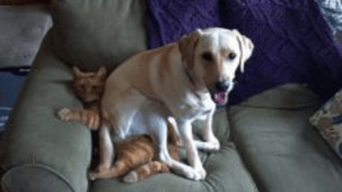 """LAV: """"Gli animali domestici non vanno considerati beni di lusso"""" – www.amoreaquattrozampe.it (Blog)"""