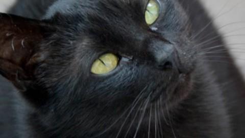Uccide il gatto in lavatrice e ne gioisce: petizione di oltre 300mila … – Il Fatto Quotidiano