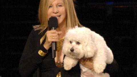 Barbra Streisand ha fatto clonare il suo cane – Blasting News