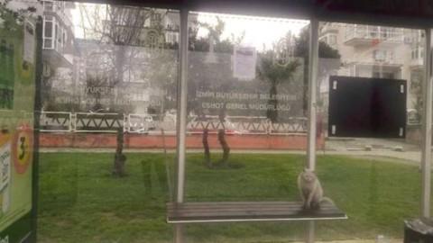 Gatto indesiderato alla fermata del bus ha la sua rivincita sul web … – Il Secolo XIX