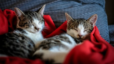 Gatti che vivono in casa: 5 idee per renderli sani e attivi – GreenStyle
