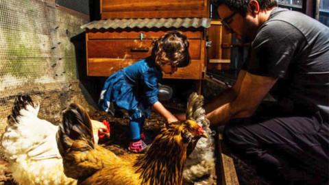 Galline in Silicon Valley: sono loro i nuovi animali domestici dei big … – Tuttosullegalline.it (Blog)