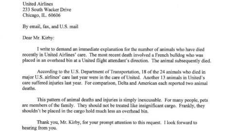 """Il senatore Kennedy a United: """"Sui vostri voli 18 cani morti sui 24 … – Il Sole 24 Ore"""