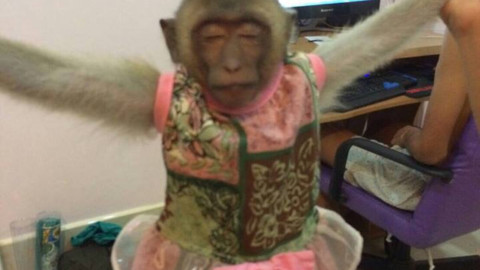 Un macaco vive 3 anni legato a un albero. Colpa dei turisti [FOTO] – Velvet Pets