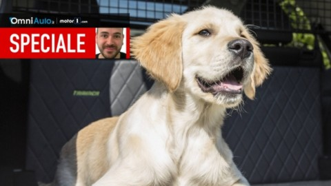 Le 9 cose da sapere per portare un cane in auto – OmniAuto.it