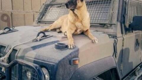 Muore Jimmy, cane antiesplosivo del contingente italiano in Libano – Il Tempo