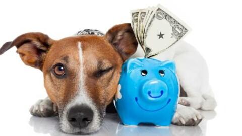 Nasce il conto corrente per cani e gatti – 105.net