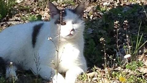 Scomparso un gatto ad Arola – Gazzetta di Parma