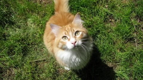 """Il gatto vi mostra il lato B? Vuol dire """"sei mio amico"""" – il Giornale"""