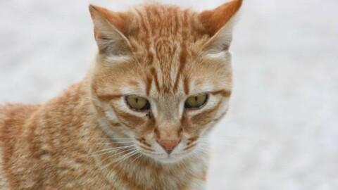 """Mistero nel Mantovano: """"Sono scomparsi almeno cento gatti rossi"""" – Quotidiano.net"""