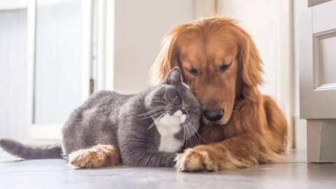 Sei modi per far sentire cani e gatti come veri re – Quotidiano.net
