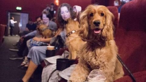 Torino, al cinema Massimo quattrozampe in sala per l'anteprima di … – La Repubblica