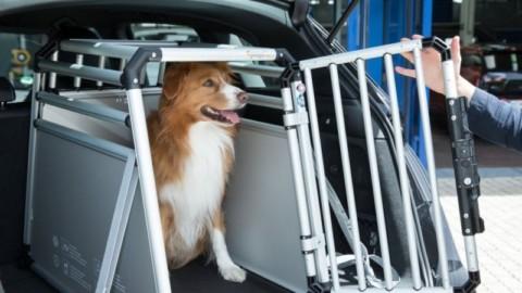 5 errori da non fare quando si viaggia con animali in auto – SicurAUTO.it (Blog)