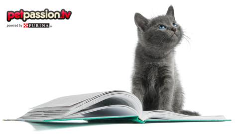 I gatti più famosi della letteratura – Petpassion.tv