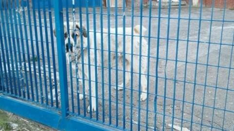 Cane abbandonato in fabbrica lager. Il cantante si mobilita e lo fa … – La Nazione