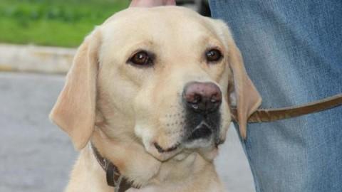 Obbligo di lavare via la pipì del cane: multe per i trasgressori – Leggo.it