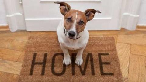 Regolamento condominiale e animali domestici: come evitare le liti – Il Messaggero