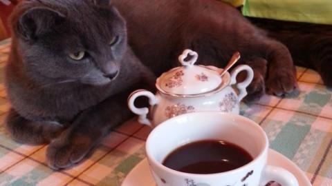 Dal Cat Cafè alla festa regionale del gatto: eventi per gli amici … – Il Gazzettino