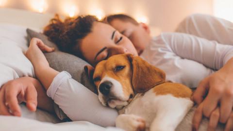 Micio e fido sono invecchiati: uno su due dorme nel lettone – Il Messaggero