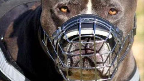 Cani di grossa taglia aggrediscono un uomo – Qui News Pisa