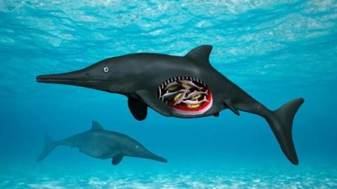 Dal Giurassico gli embrioni di un gigantesco rettile acquatico – ANSA.it
